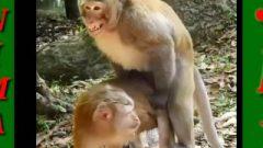 Animal Sex Video – Monkey Sex In Park / Dog Sex / Pet Sex HD